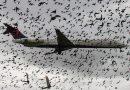 Gebreken in onderzoek vogelbotsingen Lelystad